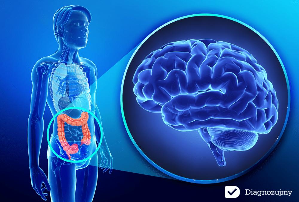 Jelitowy układ nerwowy – Twój drugi mózg