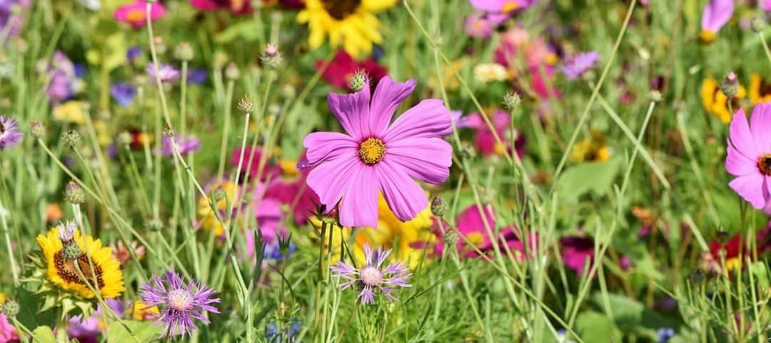 Polskie zioła lecznicze, które możesz zebrać na łące – zgromadź naturalną apteczkę!