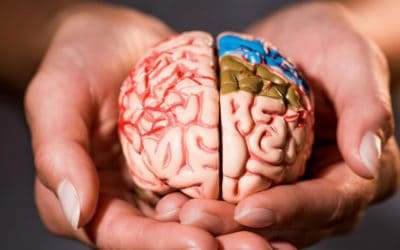 Czy wysiłek fizyczny pozytywnie wpływa na Twój mózg?