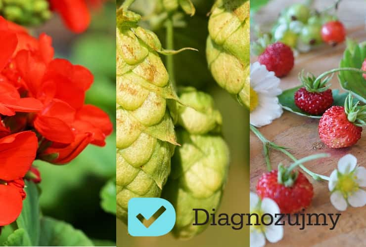 Trzy przydatne zioła, które musisz mieć w domu!