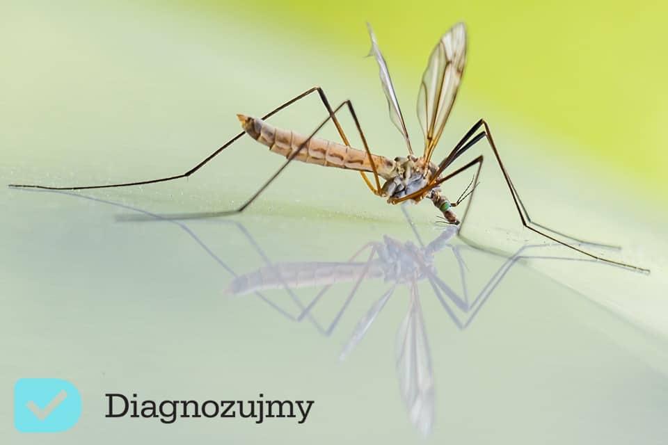 Komary- jak sobie z nimi radzić za pomocą naturalnych środków?