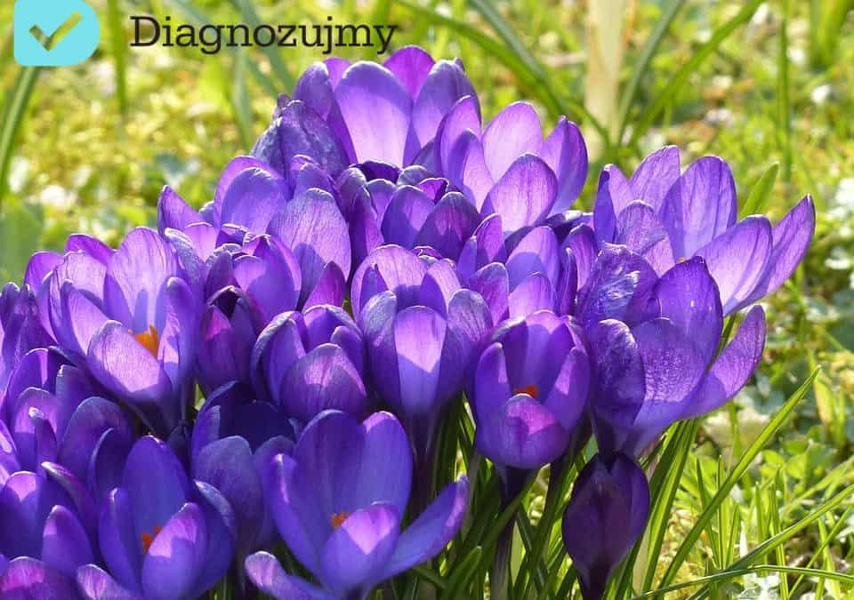 Przesilenie wiosenne- co zrobić, by odzyskać energię?